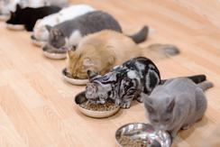 ご飯 ない 子猫 食べ